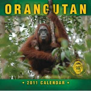 2011 Animal Calendars Orangutan   12 Month   30x30cm
