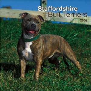 Staffordshire Bull Terriers 2008 Square Wall Calendar